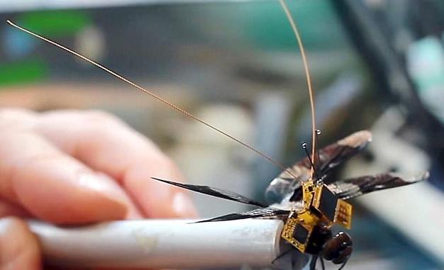 活体蜻蜓装上电子背包后秒变微型飞行器