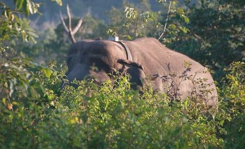 这款新型传感器可在偷猎者射击大象时发出警报