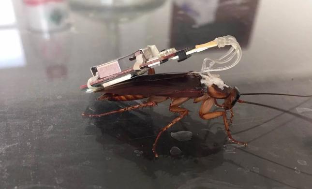 带传感器的国产昆虫机器人将亮相世界互联网大会