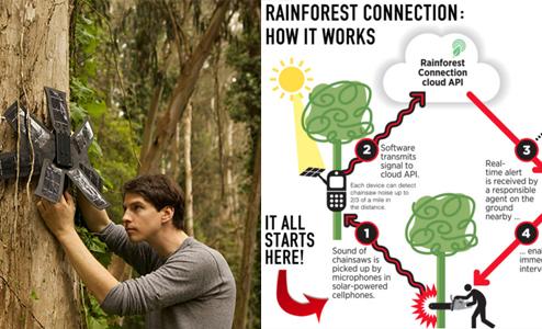 传感器等物联设备在国外动物环境保护方面的应用案例