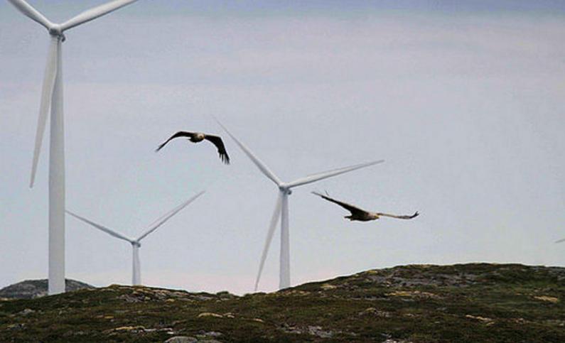 科学家借<font color=red>振动传感器</font>研究风力涡轮机撞鸟检测与规避系统