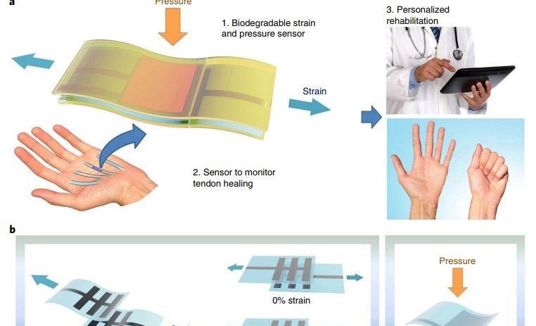 新型可自然降解传感器能监测到一粒盐产生的压力变化