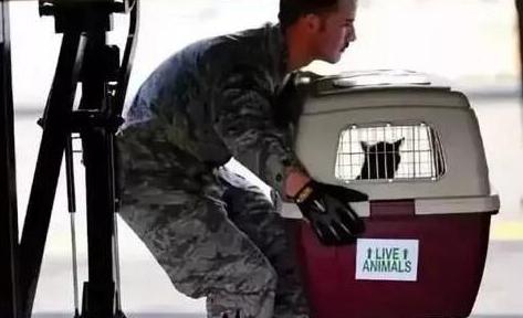 美国公司推出物联网传感器系统让宠物安全舒适飞行