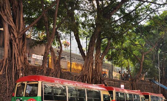 香港将为数千棵树木安装倾角传感器监测树木稳定性