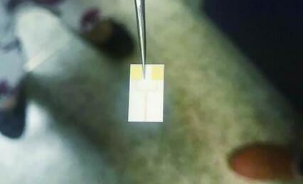 新型高精度传感器可快速监测小鼠呼吸频率
