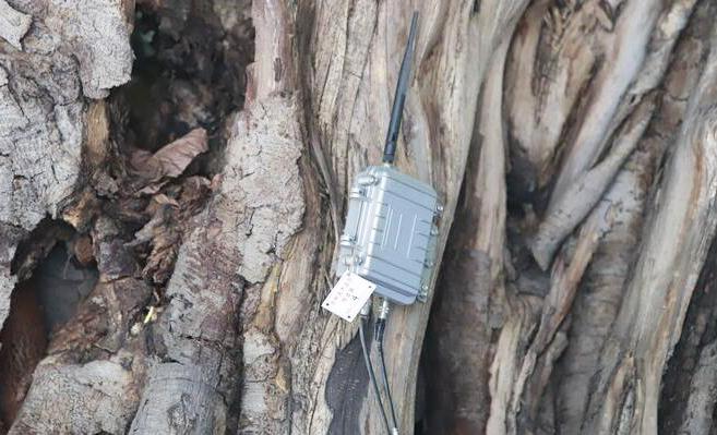 传感器在国内城市古树防盗及倾斜保护监测中的应用