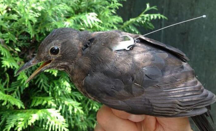 传感器和空间站技术帮科学家追踪全球野生动物迁徙活动